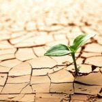 Estrés hídrico en las plantas: ¿Por qué mis plantas se secan?