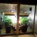 Cómo fabricar un armario de cultivo casero paso a paso y qué cultivar