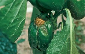 Mis plantas se pudren ¿Qué pasa y cómo solucionarlo?
