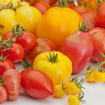 Tipos de Tomates: Conoce las variedades de tomates más cultivadas