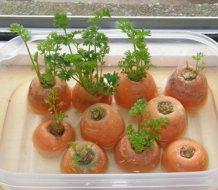 Cómo Recrecer Zanahorias: Guía completa con imágenes