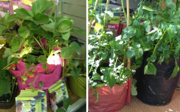 sacos de cultivo Chelsea Flower Show