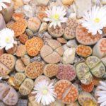 Plantas originales para regalar. 5 plantas raras y plantas decorativas