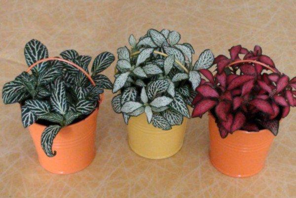 plantas originales y plantas decorativas