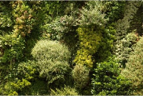 Detalle y variedad de especies en un jardín vertical.