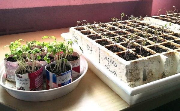hacer un semillero para tomates