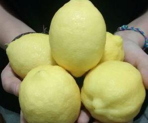 limones amarillos