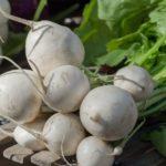 Cómo Cultivar Nabos en el Huerto con éxito: Guía Completa