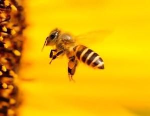 Bichos Amarillos en las Plantas: ¿Beneficiosos o dañinos?