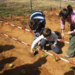 ¿Qué es un Huerto Escolar? Proyectos ecológicos escolares