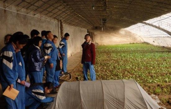 Los invernaderos nos ayudan a proteger a nuestras plantas del frío.