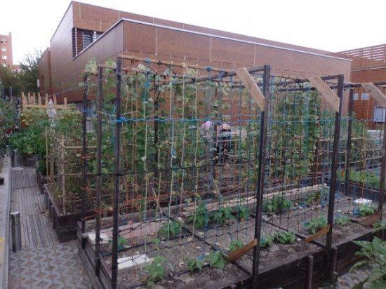 Entutorado para plantas del huerto