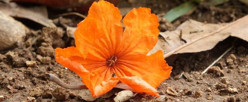Caída de flores de las plantas