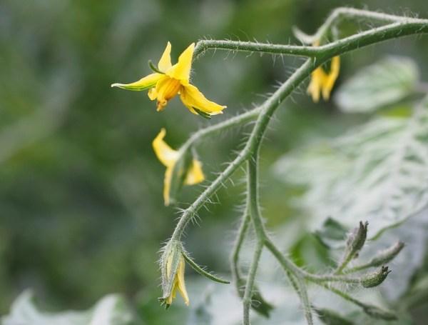 La falta de aireación puede afectar a la polinización de las plantas.