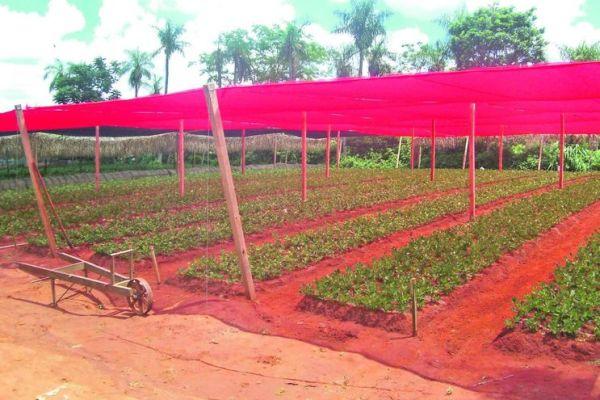 mallas de sombra para hortalizas