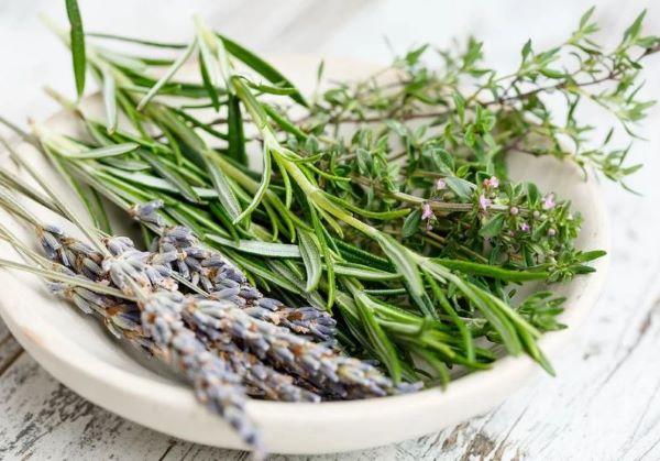 Algunas especies de tomillo se consideran plantas aromáticas al igual que otras como el romero o la lavanda.