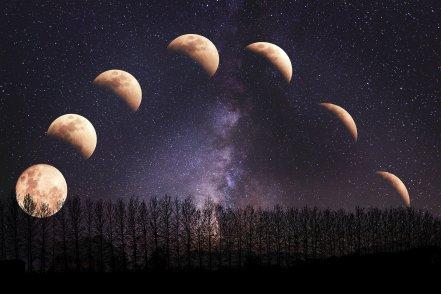 ¿Cómo influye la Luna en las plantas del huerto? - Ciclos  lunares