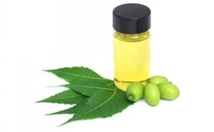 Aceite de Neem ¿Qué es y cómo usar insecticida de neem en el huerto?