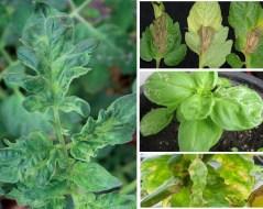 Manchas en las hojas de las plantas | Por qué aparecen y cómo eliminar