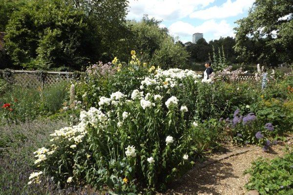 setos de flores y aromáticas para el huerto