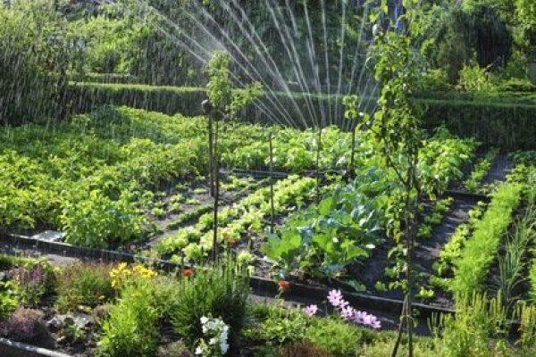 arbustos y setos para atraer abejas y otros polinizadores