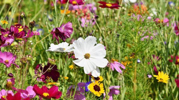 plantas para atraer a los polinizadores del huerto