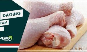 daging ayam tiren - agroindustri.id