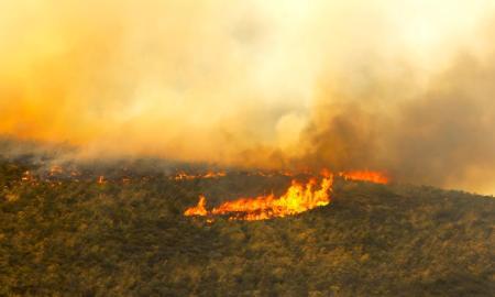 kebakaran hutan - agroindustri