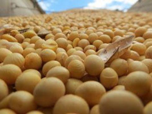 Programa Soja Plus 2015 mostra sua eficiência na Bienal da Agricultura