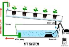 Photo of Kelebihan dan Kekurangan Hidroponik Sistem NFT