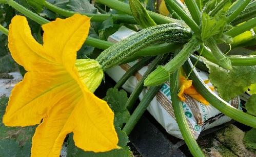 zucchino_home1