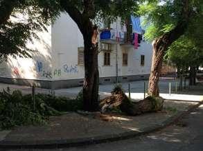 albero_caduto_via_amato_1