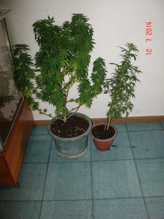 droga agropoli 1