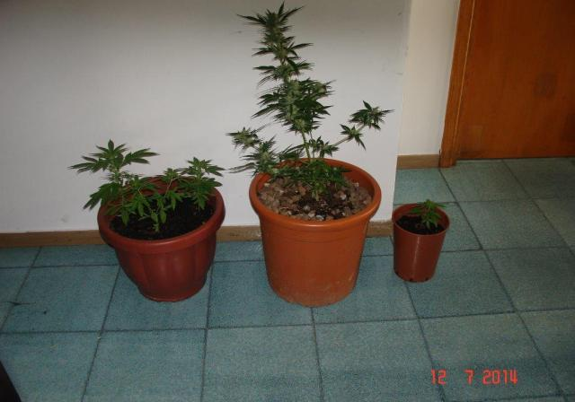 droga agropoli 4