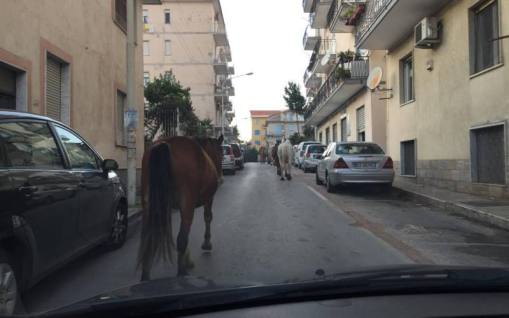 cavalli strada