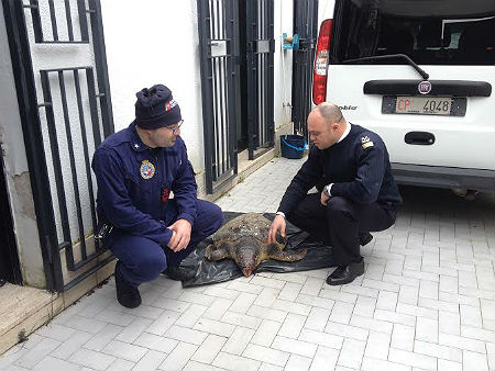 tartaruga_guardia_costiera_2