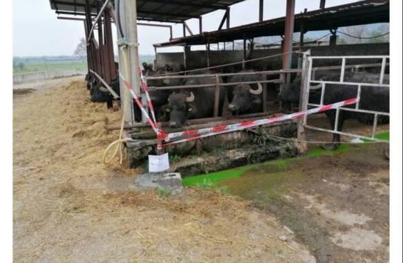 bufale 1
