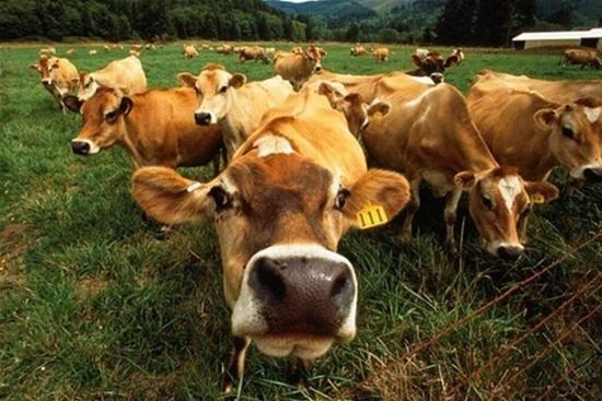 Животноводство доска объявлений для АПК