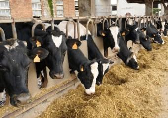 genes de resistencia a antibioticos en el excremento de las vacas