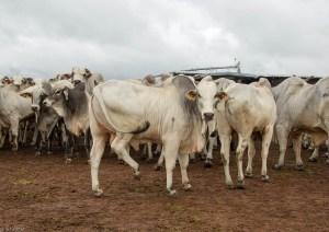 gases de efecto invernadero cerrado brasil