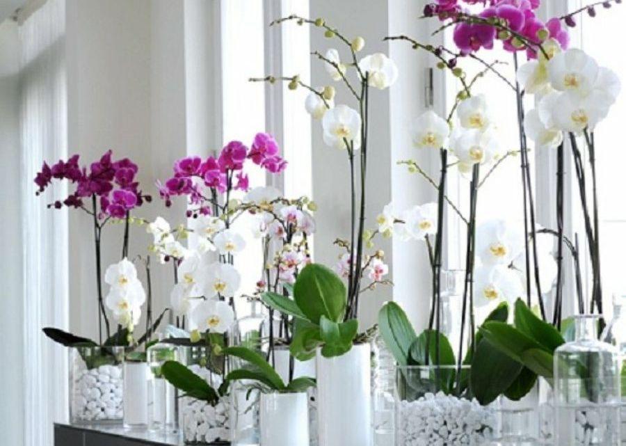 Como cultivar orquídeas