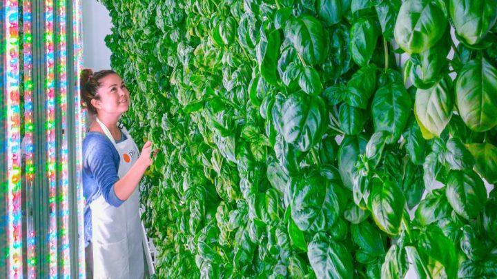 Una granja indoor junto a cada ciudad importante en el mundo. La compañía que quiere hacerlo realidad