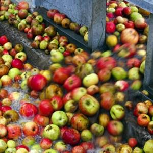 lavado de manzanas