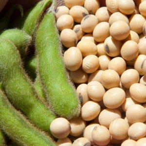 soja con nivel de proteina y rendimientos altos