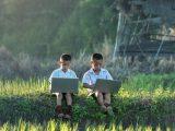 AgriKnowledge, acceso a información clave para el desarrollo agrícola