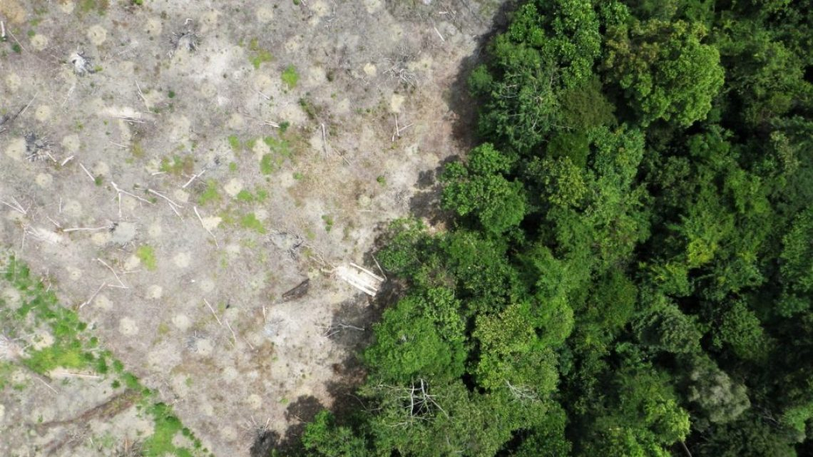 Limitaciones económicas y sociales de la reforestación