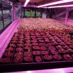 Apply for $50k Investment Opportunity for Indoor Agtech Startups