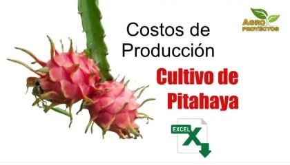 Costos del cultivo de pitahaya