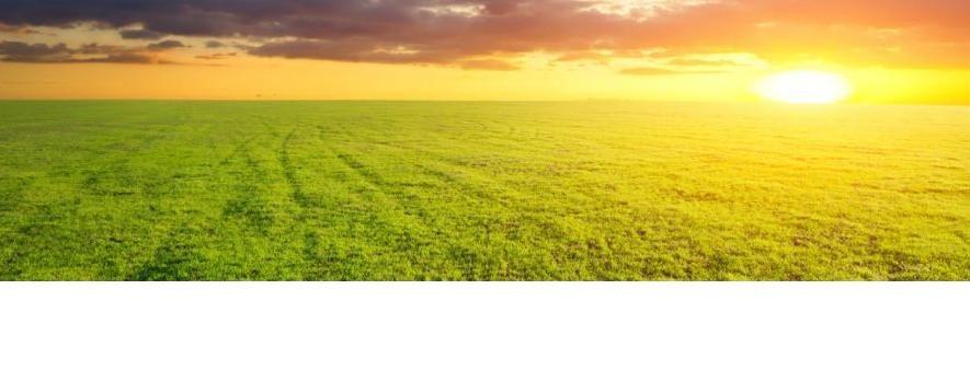 Τι αποκαλύπτουν τα μεσογονάτια διαστήματα για την υγεία των φυτών;