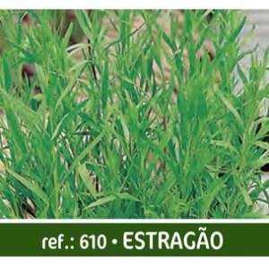 agroshop sementes estragão
